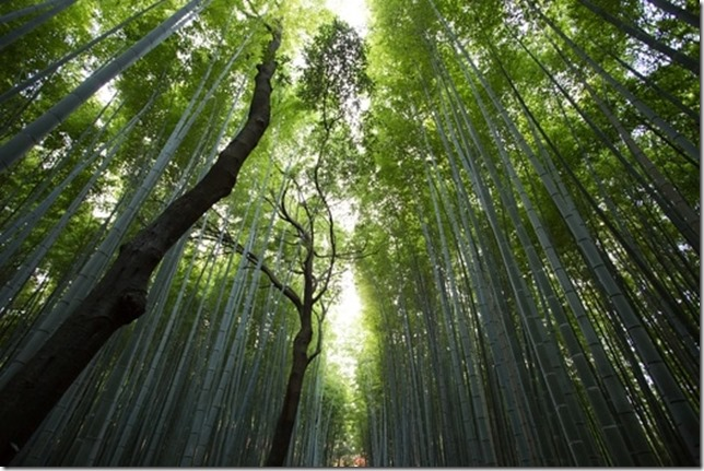 nature-forest-trees-bamboo-medium
