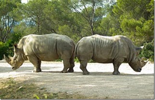 rhinoceros-782278__180