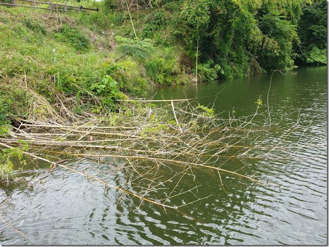 亀山湖-竹のカバー