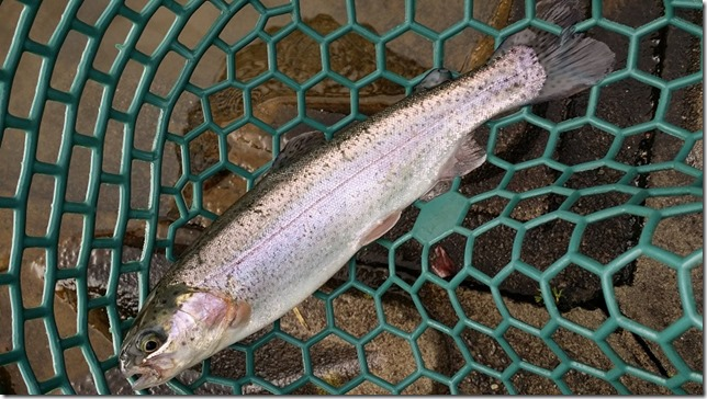 Area Trout