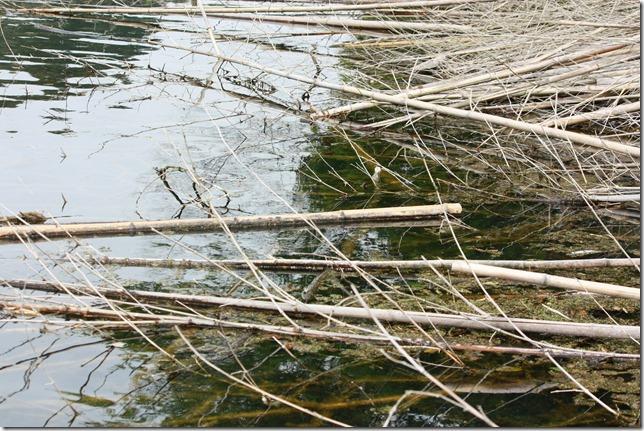 竹のレイダウン-2
