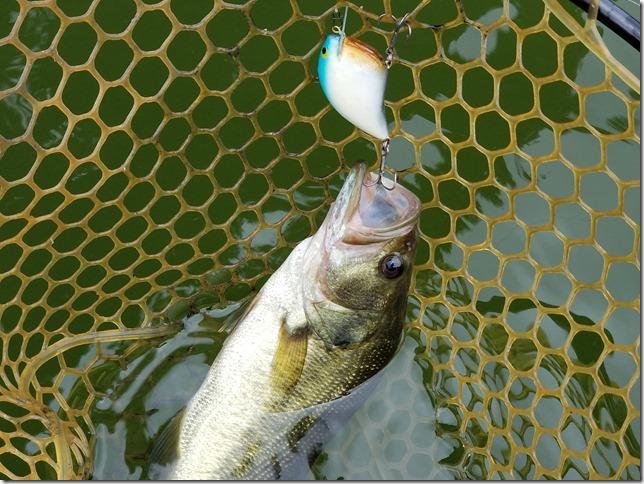 Crankbait fish