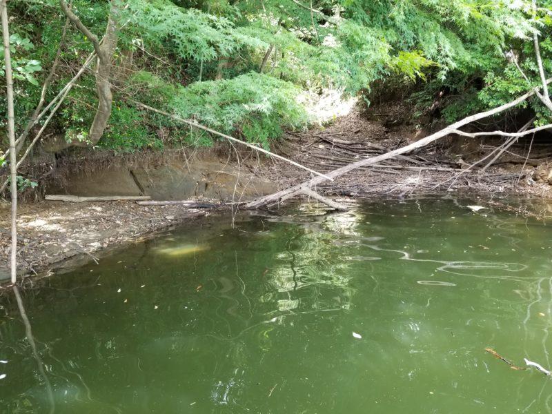減水の亀山ダム-3