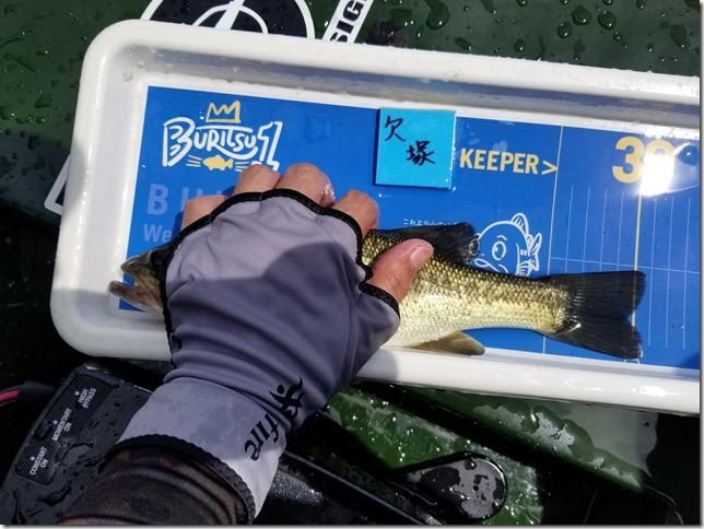 Forward Blueで釣れた魚