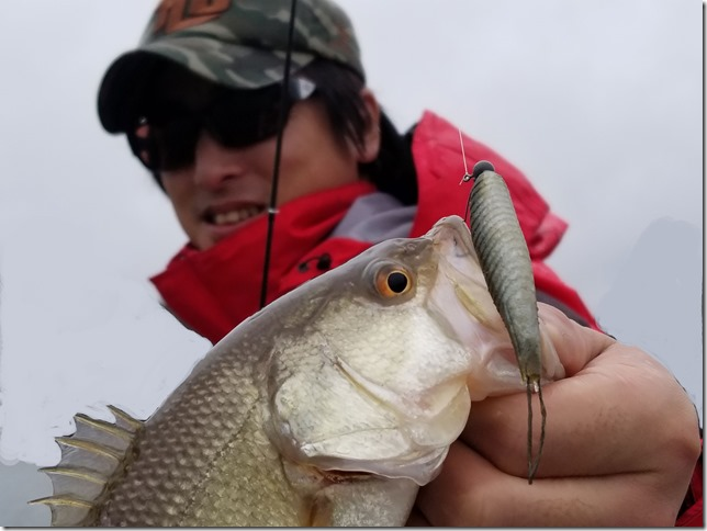 Bass-Fishing-Guide-Mid-Strolling-(49)